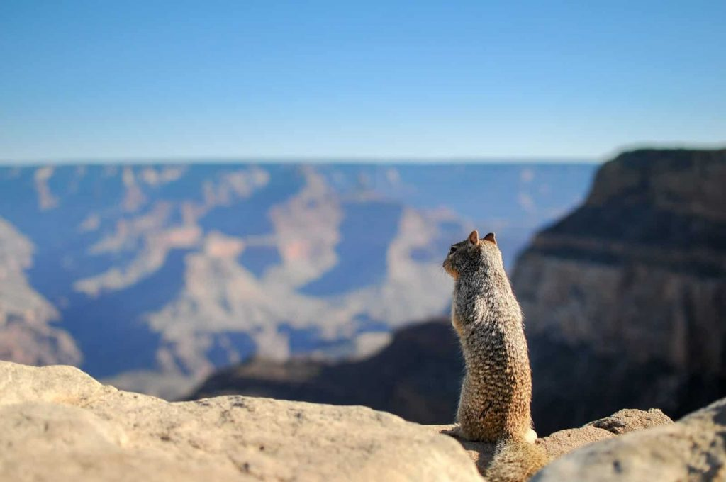 some kind of chipmunk looking over the top of a mountain